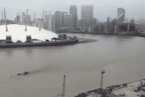 Mystery Creature Swimming Through The Thames