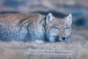 'Netflix glitch' puts comedy show subtitles on nature documentary