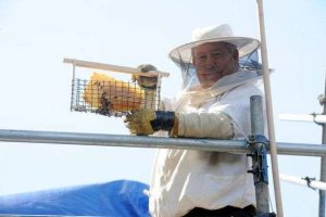 110,000 Bees removed from HOSPITAL after Honey on the walls