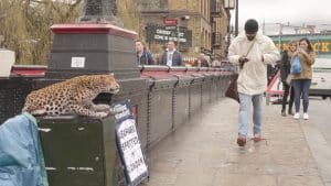 A LEOPARD HAS ESCAPED FROM LONDON ZOO