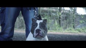 P110 – Big Dog Yogo – Sniper [Net Video]