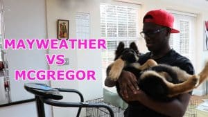 MY DOG PREDICTS CONOR MCGREGOR VS FLOYD MAYWEATHER