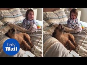 Adorable video shows little girl howling alongside her dog friend – Daily Mail