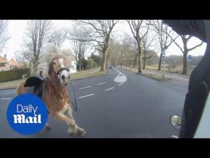 Biker chases runaway horse – Daily Mail