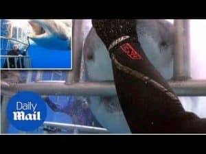 Brave diver puts his hands under shark's mouth and pushes it away – Daily Mail