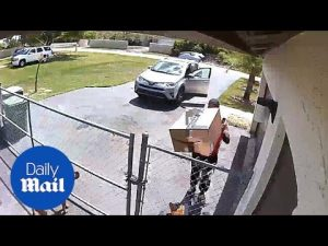 Cruel Amazon deliveryman drops large package on top of puppy – Daily Mail