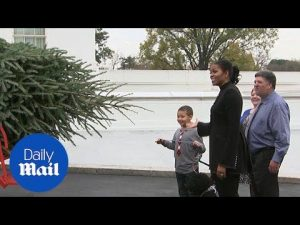Michelle Obama receives HUGE Christmas tree at the White House – Daily Mail