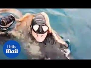 Moment surprised diver emerges from water with OCTOPUS on back – Daily Mail