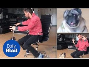 Peppy pug is perplexed by disappearing ball magic trick – Daily Mail