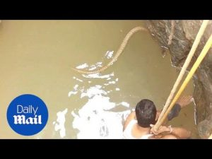 Snake catcher catches 6 foot cobra snake – Daily Mail