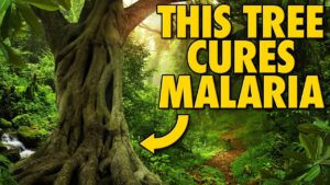 10 Cures Discovered By Accident